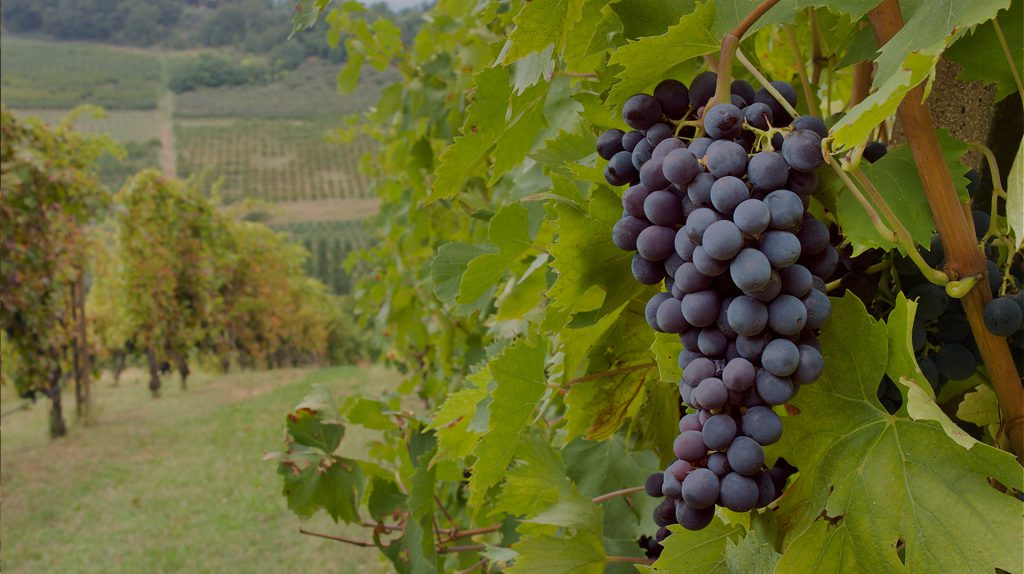 Grand River Cellars Winery